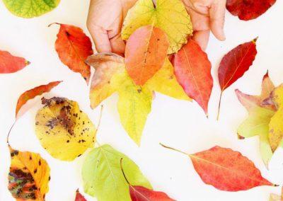 Collaborative Leaf Artwork